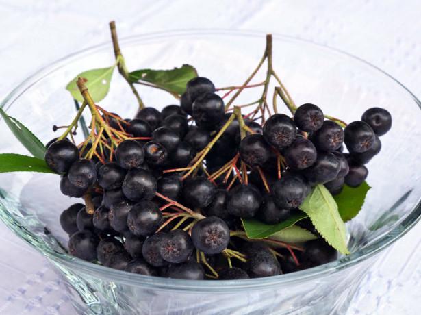 Арония - черноплодная рябина