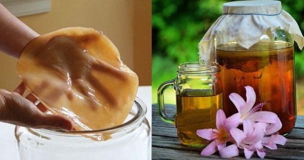 Чайный гриб при атеросклерозе